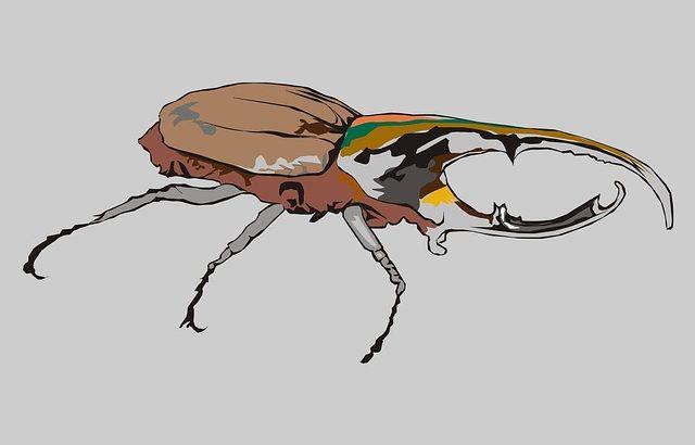 ギフテッド カブトムシの幼虫を飼う