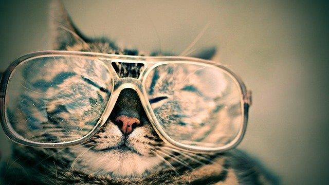 視力落ちる 子供が1年で視力が悪くなる原因